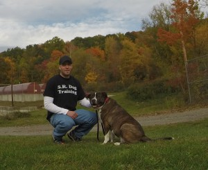 About Dog Training in Westchester NY and Putnam NY - S.R. Dog Training