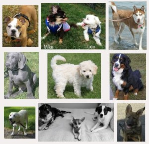 Dog Training in Westchester NY and Putnam NY - S.R. Dog Training