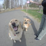 Dog Training Danbury CT