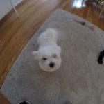 Dog Training Dobbs Ferry NY