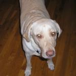 Dog Training in Harrison NY