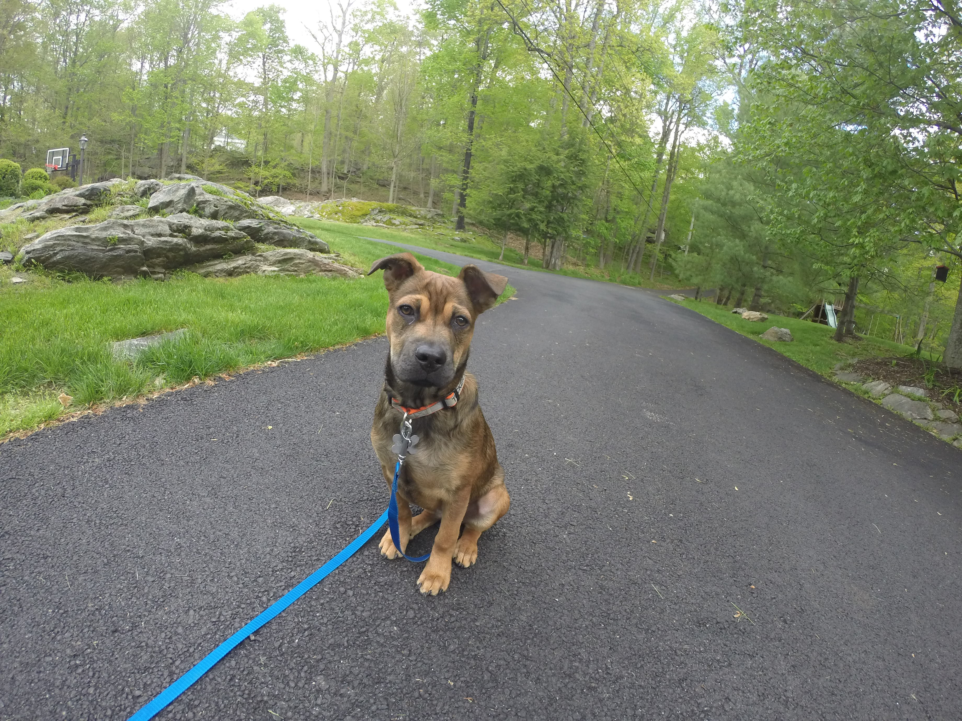 Westchester Dog Training