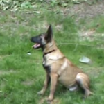 Dog Training in Harrison NY
