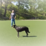 Dog Training in Tarrytown NY