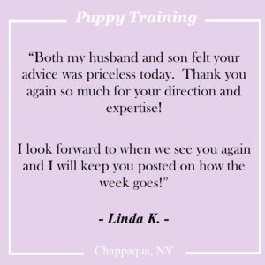 Dog Trainer in Chappaqua NY
