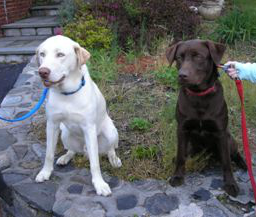 Nanook and Kodial in Sit