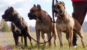 Three D's of Dog Training