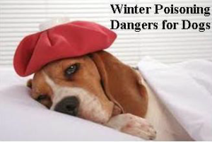 Winter Poisoning Dangers for Dogs