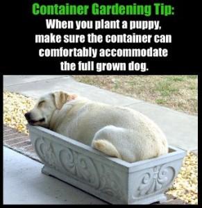 Stop Puppy Behavior Problems