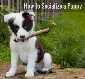 Puppy Socialization Checklist