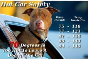 Hot Car Safety for Dogs