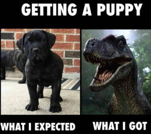 how to avoid puppy biting