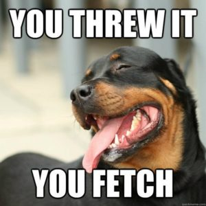 Teach Your Dog to Play Fetch