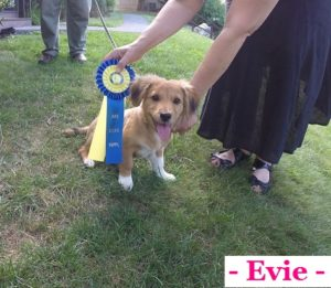 AKC Puppy Training in Irvington NY