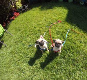 Dog Trainer Carmel NY