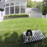 Dog Obedience Training in Westchester NY