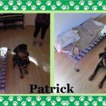Rottweiler Training Westchester NY