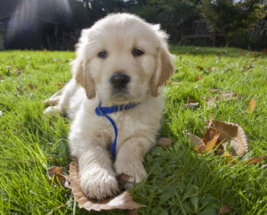 Tips for Beginner Obedience Training