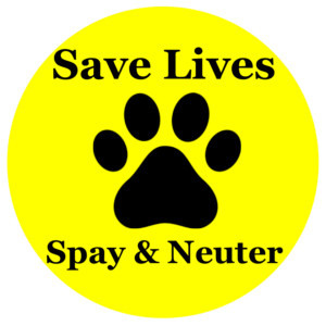 Myths and Facts About Spaying and Neutering Dogs