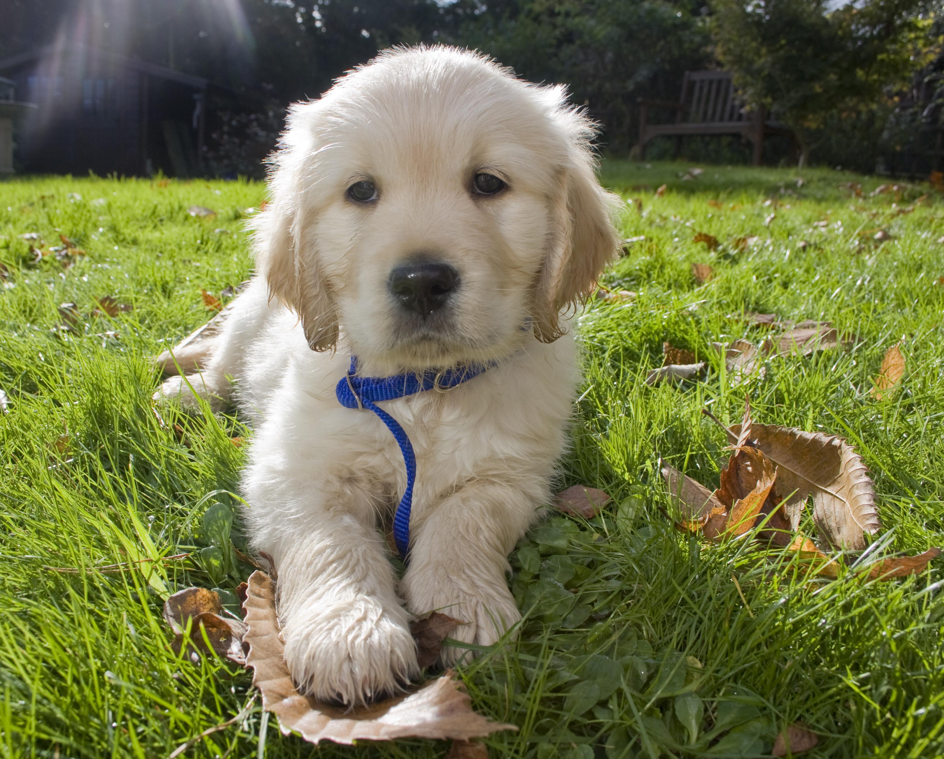 Dog Collar Training Tips