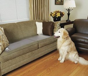 Keep Your Dog Off Furniture