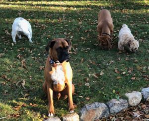Obedience Training in Putnam NY