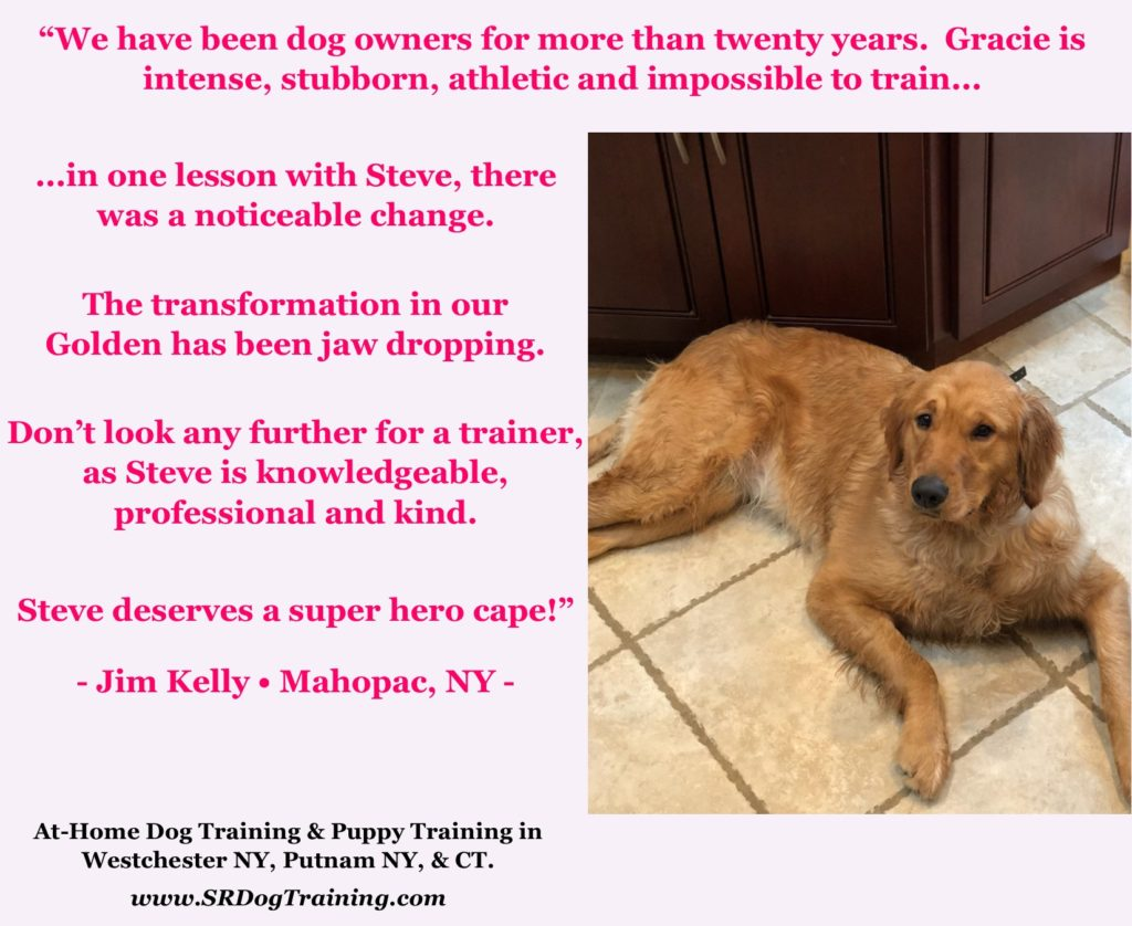 Golden Retriever Training Putnam NY