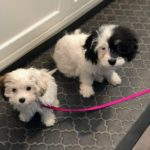 Puppy Training in Armonk NY