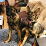 Dog Training in Mahopac NY