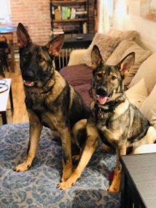 Dog Training in Mahopac NY