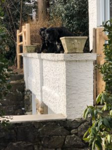 Dog Training in Ardsley