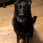 Dog Trainer in Carmel NY
