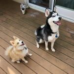 Dog Trainer in Putnam County NY