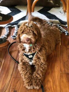 Dog Training in South Salem NY